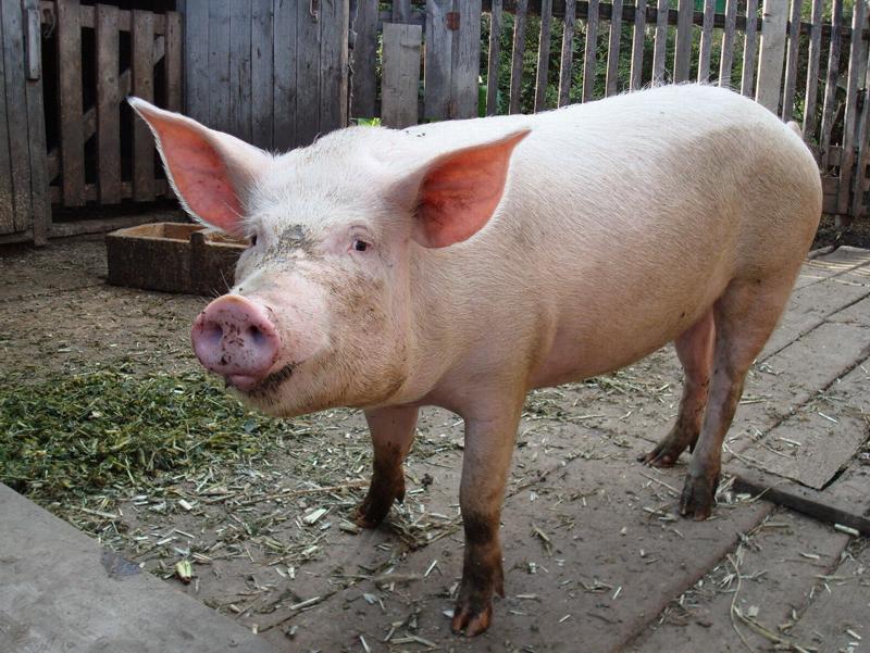 Киевлянин 4 года управляет хозяйством в селе через интернет деревня, технологии