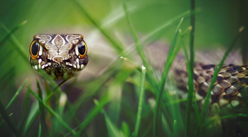 20 очень необычных фотографий животных 9_14
