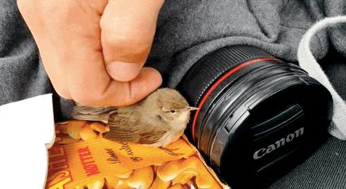 животные, птица, спасение