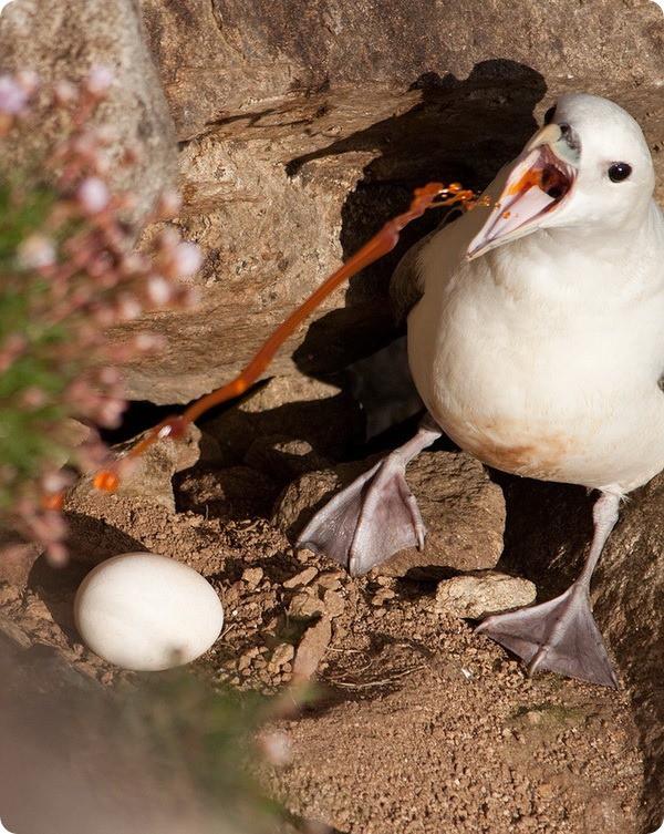 19 фактов, доказывающих, что природу стоит остерегаться
