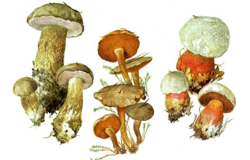 Картинки по запросу Разделители для текста грибы